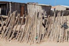 Staket som göras av kaktuns royaltyfri foto
