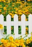staketblomma Fotografering för Bildbyråer