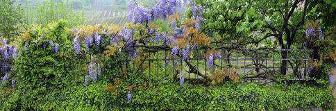 staketblommaträdgård Royaltyfria Bilder