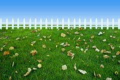 staketgrässlättleaf Royaltyfria Foton