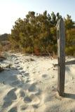 Staketstolpen och skurar sörjer i sanderna av Assateague Royaltyfri Foto