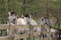 stakettarpans Royaltyfria Bilder
