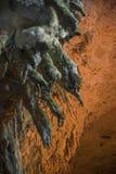 Stalactites à l'intérieur de la caverne Kefalonia de lac Melissani Image stock