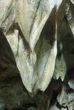 stalactites stock afbeelding