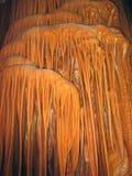 Stalactites et caverne de stalagmite Photo libre de droits