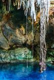 Stalactites and roots at the the Cuzama Cenote, Yucatan, Mexico. Stalactites mixed with roots in the the Cuzama Cenote, Yucatan, Mexico royalty free stock image