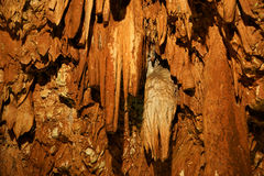 Stalactites and stalagmites in a cave Royalty Free Stock Photo