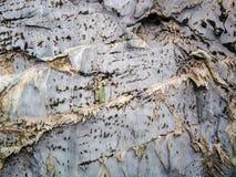Stalactites surface, natural background royalty free stock photos