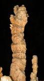 stalagmites Royaltyfri Fotografi