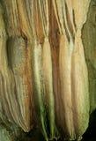 Stalagmites et stalactites Photographie stock