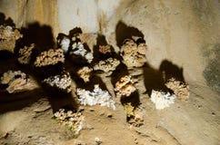 stalagmites Marmeren hol crimea Stock Fotografie