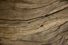 Stale fallen trunk with streaks royalty free stock image