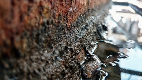 Stali rdza z zieleni wody algami zdjęcia royalty free