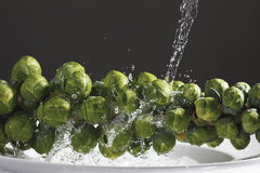 Stalk of brrussels sprout under jet of water Stock Images
