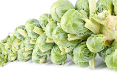 Stalk of Brussels Sprouts Royalty Free Stock Photography