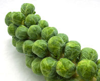 Stalk of brussels sprouts Royalty Free Stock Image