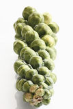 Stalk of brussels sprouts Stock Photos