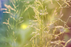Stalk of grass in the meadow Stock Photography