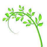 A stalk of leaves. A green stem with leaves vector illustration