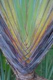 Stalk palm Royalty Free Stock Photos