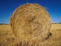 Stalk of straw. In field Stock Photography