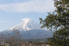 Stalk of tree and view of Mount Fuji. Stock Photography