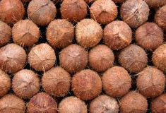 Stalked Coconuts. Many fresh coconuts stalked in a market ready for sale Royalty Free Stock Photo