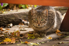Stalking cat Stock Photo