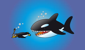 Stalking danger. A naive penguin snorkeling while being chased by a hungry orca whale.A naive penguin scuba diving while being chased by a hungry orca whale. Hi Royalty Free Stock Images