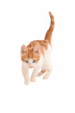 Stalking hunting kitten Stock Photo