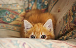 Stalking little kitten Stock Images