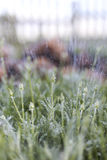 Stalking plant, rain and stone. A lot of flowers, lawns on the site. rain, water Royalty Free Stock Photo