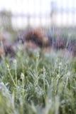 Stalking plant, rain and stone. Royalty Free Stock Photo