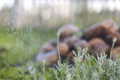 Stalking plant, rain and stone. A lot of flowers, lawns on the site. rain, water Royalty Free Stock Photos