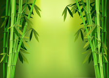 Stalks  bamboo. Vector images of stalks of bamboo Royalty Free Stock Image