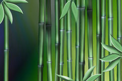 Stalks of Bamboo Stock Photos