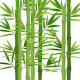 Stalks of bamboo with green leaves flat theme in realistic Stock Photos