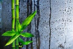 Stalks bamboo on wet glass Stock Photo