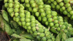 Stalks of brussels sprout at farmers market royalty free stock photos