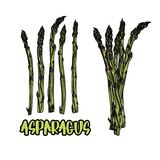 5 stalks and bundle of asparagus. Stock Photo