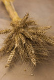 Stalks of golden wheat grains tied up Royalty Free Stock Images