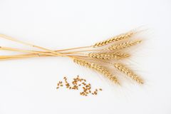 Stalks and grain of wheat  on white Stock Image