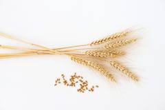 Stalks and grain of wheat  on white. Stalks of wheat  on white Stock Image