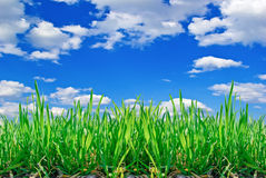 Stalks of grass on the background of blue sky with clouds. Royalty Free Stock Photography