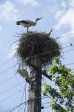 Stalks in nest Stock Photos