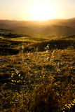 Stalks of oats on rural to sunset Stock Photo