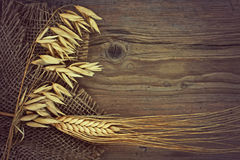 Stalks of oats and rye Stock Images