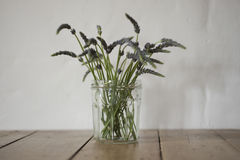 Stalks of Plant or Grass in Clear Glass Jar Stock Photography