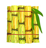 Stalks of sugar cane. Stock Photography