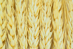 Stalks of wheat ears Royalty Free Stock Photography